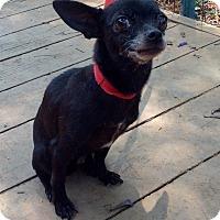 Adopt A Pet :: Etta (5 Ibs.) - Santa Ana, CA