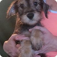 Adopt A Pet :: Nigel - Greenville, RI