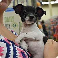 Adopt A Pet :: Tiny - Ogden, UT