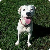Adopt A Pet :: Virginia - Shinnston, WV