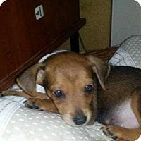 Adopt A Pet :: Moe - Berwick, PA