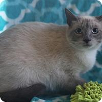 Adopt A Pet :: Hyacinth - Staunton, VA