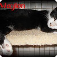Adopt A Pet :: Wailing Waylon - Covington, LA