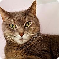 Adopt A Pet :: Jezibel - Salisbury, MA