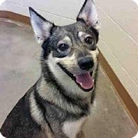 Adopt A Pet :: BERTIE - Texas City, TX