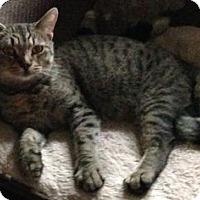 Adopt A Pet :: Tinkerbell - Toledo, OH