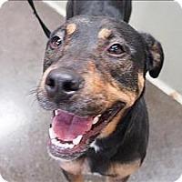 Adopt A Pet :: Pink - Portland, OR