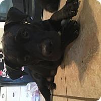 Adopt A Pet :: Meleah - Olympia, WA