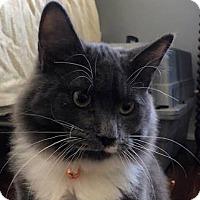 Adopt A Pet :: Joe - Mebane, NC