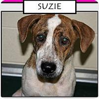 Adopt A Pet :: SUZIE - Williamsburg, VA