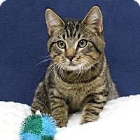 Adopt A Pet :: Tuna - McCormick, SC