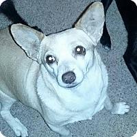 Adopt A Pet :: Janet - Crestview, FL