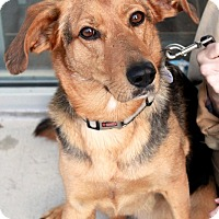 Adopt A Pet :: Jessie - Youngsville, NC