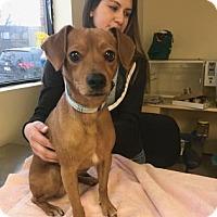 Adopt A Pet :: Tucci - Chicago, IL