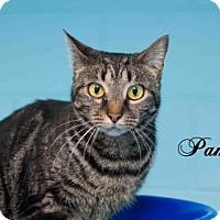 Adopt A Pet :: Pamela - Middleburg, FL
