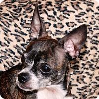 Adopt A Pet :: Chloe - Portola, CA