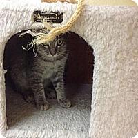 Adopt A Pet :: Flora - Lake Charles, LA