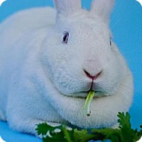 Adopt A Pet :: Winston & Winnie - Whittaker, MI