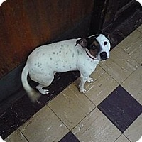 Adopt A Pet :: RCA - Wisconsin Dells, WI