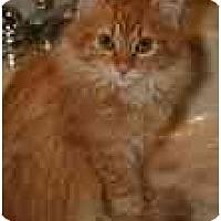 Adopt A Pet :: Leo - Arlington, VA