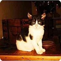 Adopt A Pet :: Mulan - Modesto, CA