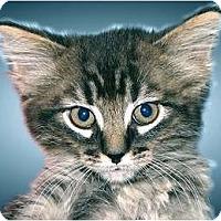 Adopt A Pet :: Harper - Montgomery, IL