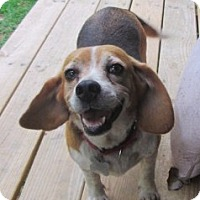 Adopt A Pet :: MILLIE - Lincolndale, NY