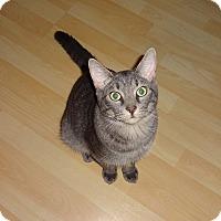 Adopt A Pet :: Martin - Tampa, FL