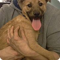 Adopt A Pet :: Calypso - New Oxford, PA