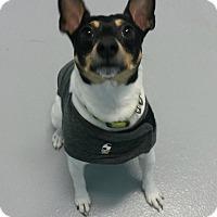 Adopt A Pet :: Archie - Muskegon, MI