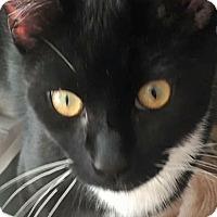 Adopt A Pet :: Stewy - Island Park, NY