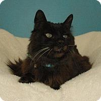 Adopt A Pet :: Lewis - Cincinnati, OH