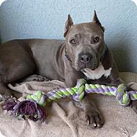Adopt A Pet :: MAYA - Fort Lauderdale, FL