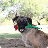 Adopt A Pet :: Becca - Tucson, AZ