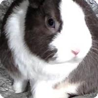 Adopt A Pet :: Dwarf Buck - Trenton, NC