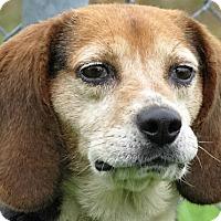 Adopt A Pet :: Jake - Germantown, MD