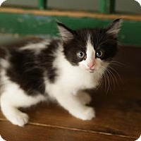 Adopt A Pet :: Dotty - San Antonio, TX
