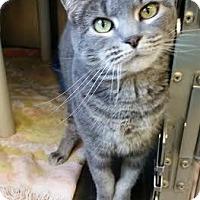 Adopt A Pet :: Veruka - Chippewa Falls, WI