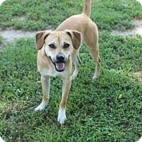 Adopt A Pet :: Pablo - Allentown, PA