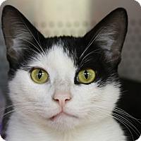 Adopt A Pet :: Gavin - Sarasota, FL
