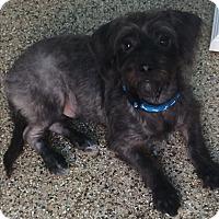Adopt A Pet :: Luca - Thousand Oaks, CA