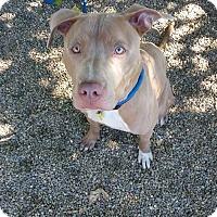 Adopt A Pet :: Zorro - Cleveland, OH