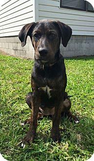 Hound (Unknown Type) Mix Puppy for adoption in Gainesville, Florida - Jada
