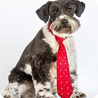 Adopt A Pet :: Dexter - Phelan, CA