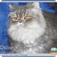Adopt A Pet :: Oscar - South Bend, IN