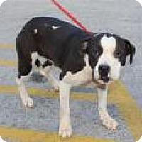 Adopt A Pet :: Uma - Madisonville, TN