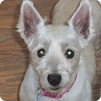 Adopt A Pet :: Bambi-Pending Adoption - Omaha, NE