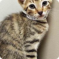 Adopt A Pet :: Lester - Hinsdale, IL