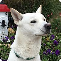 Adopt A Pet :: Brady - Watauga, TX