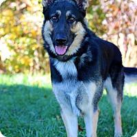 Adopt A Pet :: Zack - Waldorf, MD